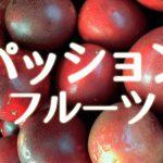 生まれて初めて食べた「沖縄のパッションフルーツ」の美味しさに感激した話。