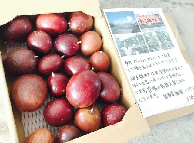 熱帯果樹園小池さん家のパッションフルーツ