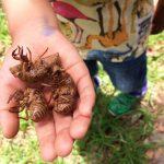 4歳の息子との虫捕りで成長を感じた話。与えられた時間を大切にしよう。