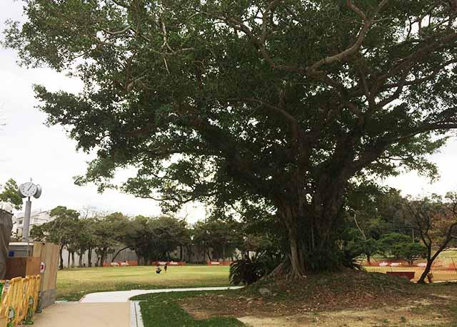浦添大公園の新しい遊具の2つ目の広場