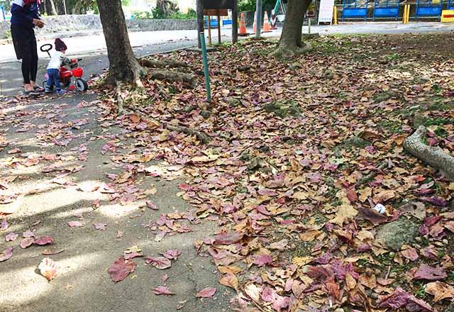 浦添大公園の新しい遊具には落ち葉がたくさん