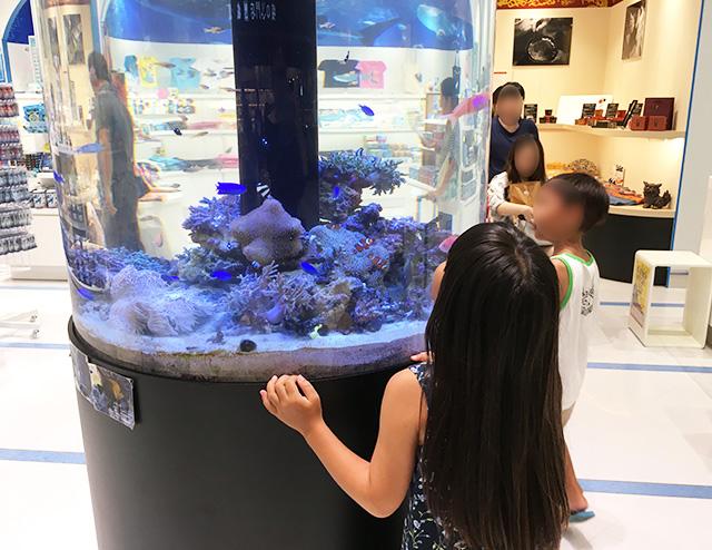 水槽を見る子供